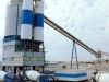 Elba Tower Plant
